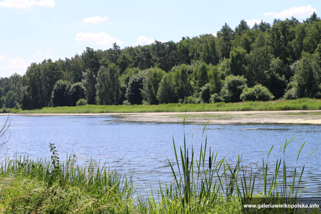 Zbiornik wodny w Wierzonce